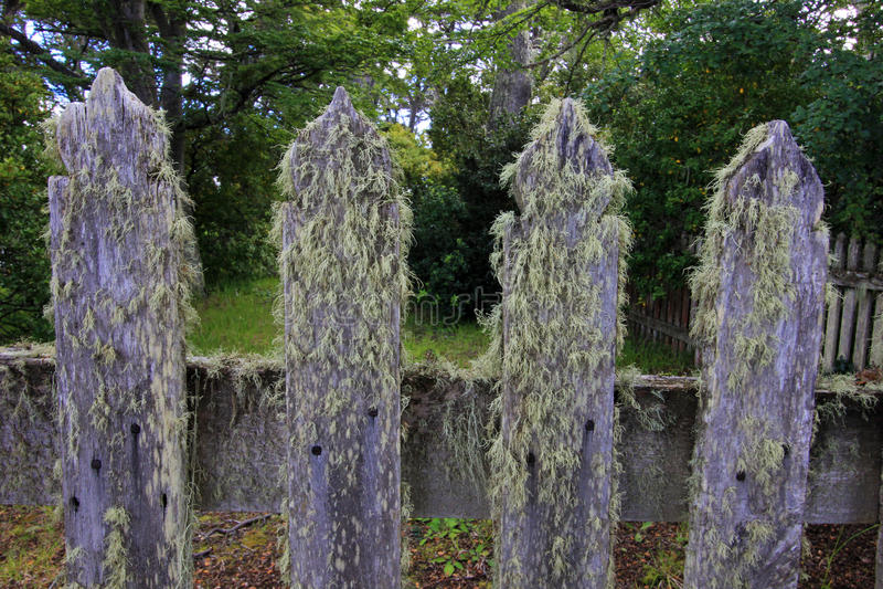 Porosły drewniany ogródu ogrodzenia szczegół przy gospodarstwem rolnym, Patagonia, Argentyna obraz royalty free