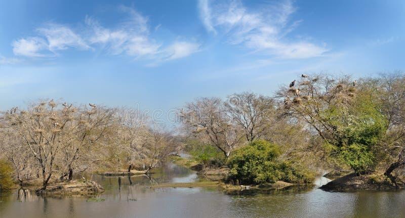 Porosli drzewa w stawu Keoladeo parku narodowym zdjęcia stock