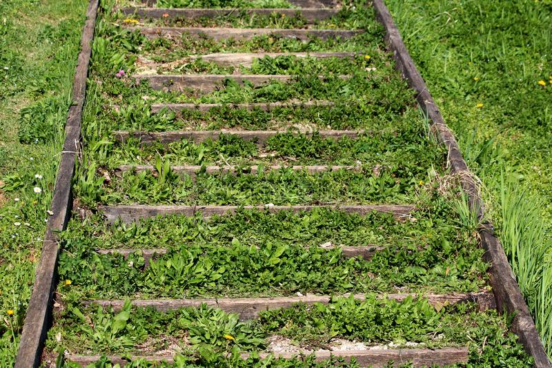 Porosli starzy obdrapani krakingowi drewniani kroki wspinali się na stronie zakrywającej z uncut trawą i małymi roślinami brzeg r zdjęcia stock