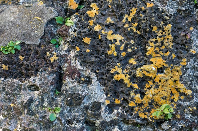 Porous volcanic rock of the Azores. Close-up. Texture. Island of San Miguel. Ponta Delgada, Azores, Portugal royalty free stock image