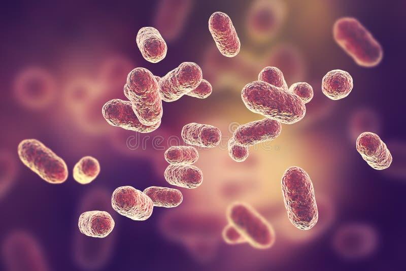 Porphyromonas gingivalis细菌 库存例证