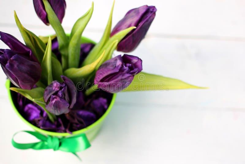 Porpora dei tulipani: congratulazioni, l'8 marzo giorno internazionale del ` s delle donne, il 14 febbraio giorno del ` s del big immagini stock libere da diritti