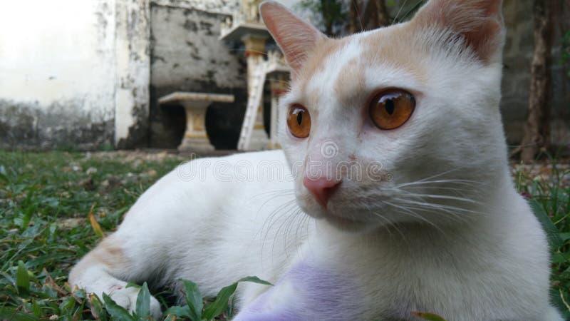 Porpora del gatto w immagine stock