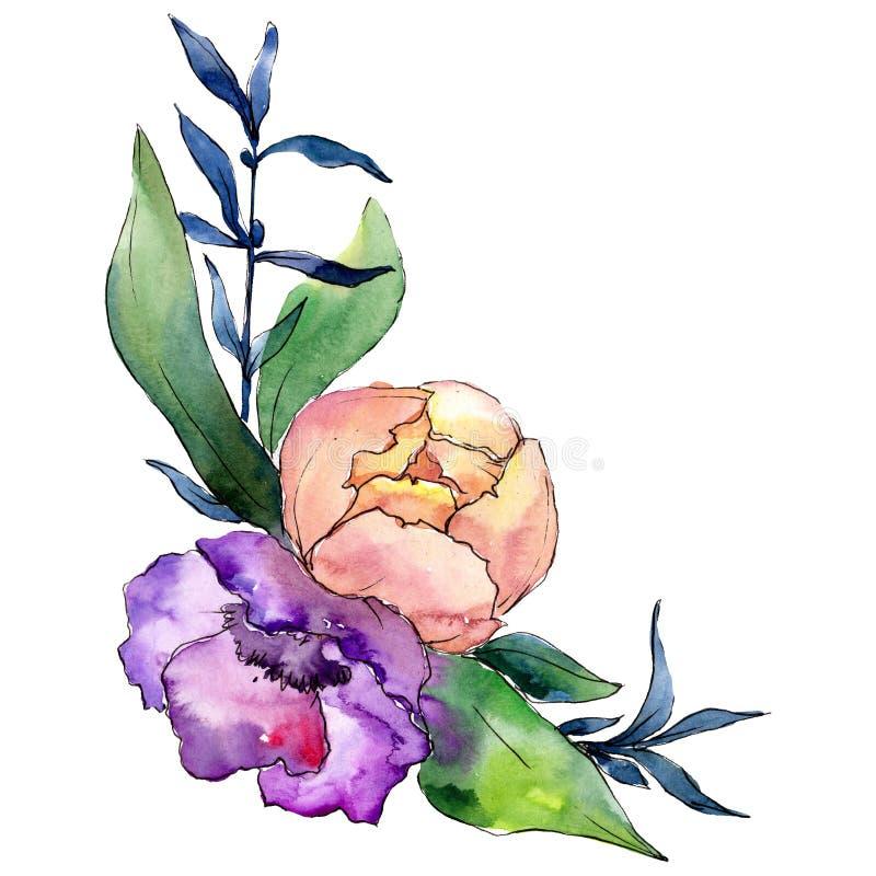 Porpora e peonia rosa con le foglie verdi Elemento isolato dell'illustrazione del mazzo Insieme dell'illustrazione del fondo dell illustrazione di stock