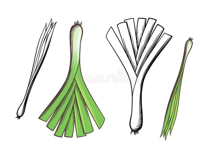 Porree- und Frühlingszwiebelillustration stock abbildung