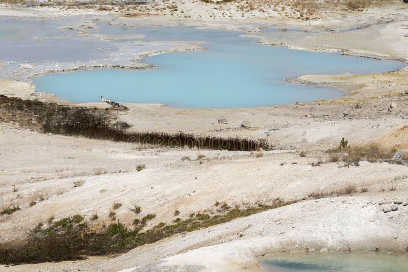 Porslin för Norris geyserhandfat in i den Yellowstone nationalparken royaltyfria bilder