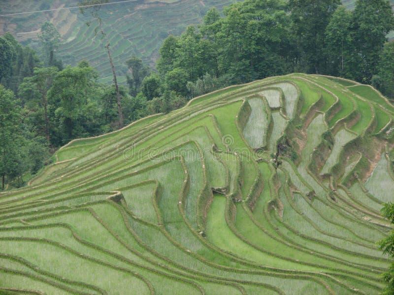 porslinrice terrasserar yuanyang yunnan royaltyfri foto