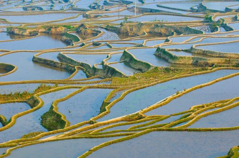 porslinrice terrasserar yuanyang yunnan royaltyfri bild