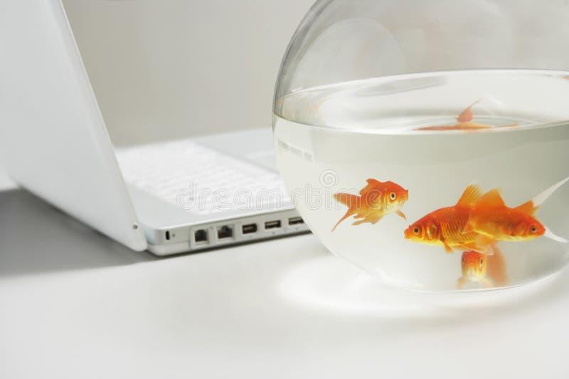 Portátil e peixe dourado na bacia imagem de stock royalty free