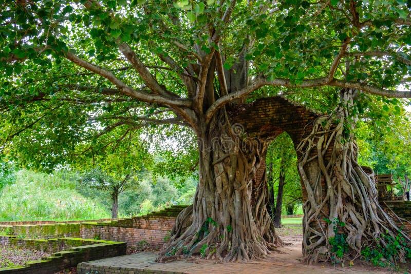 Port av tid Båge av bodhiträdet Osedda Thailand på Wat Phra Ng royaltyfria bilder
