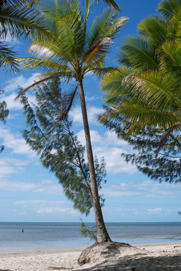 Port Douglas lizenzfreies stockfoto