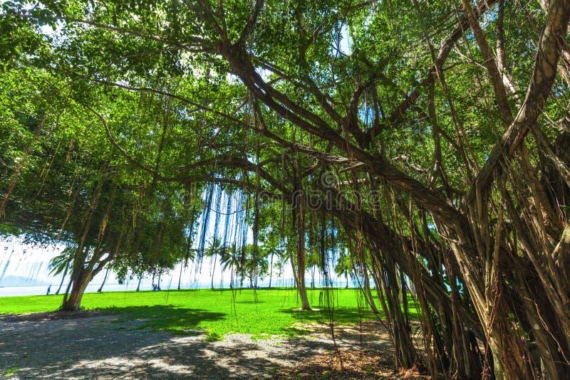 PORT DOUGLAS AUSTRALIEN - 27 MARS 2016 Rex Smeal Park i port arkivbild