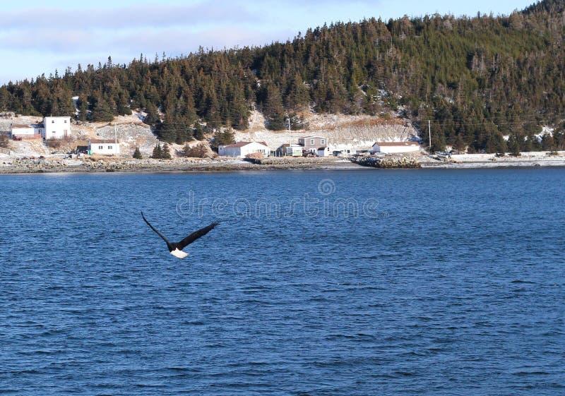 Port Eagle chauve de port de Terre-Neuve images libres de droits