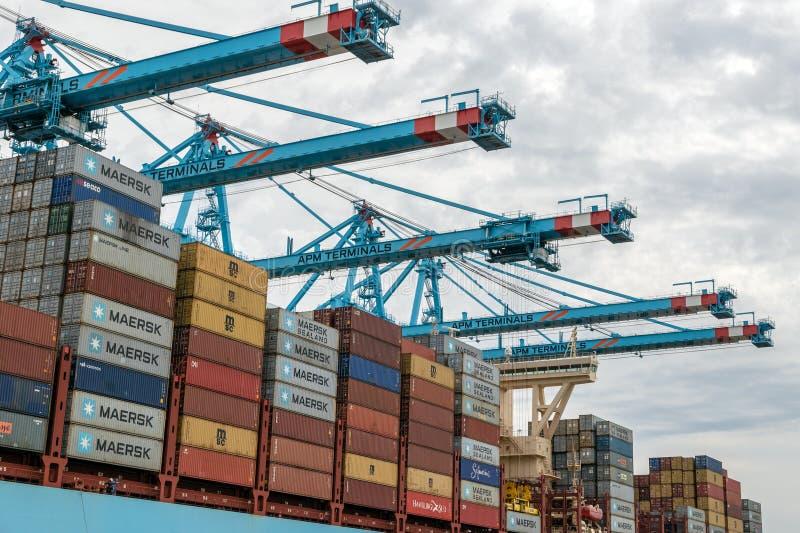 Port för Maersk behållareskepp av Rotterdam royaltyfri bild