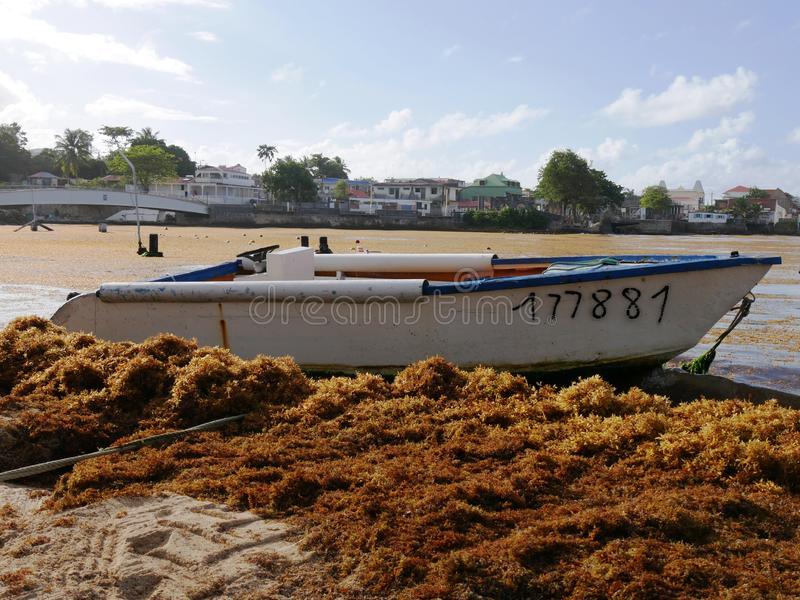 Port foremka w Guadeloupe zanieczyszczał Sargassum obrazy royalty free