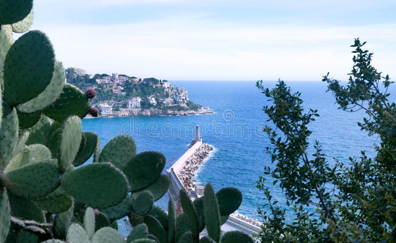 Port of the French city of Nice. Beautiful mountains, the port, the lighthouse and the turquoise sea. Wild cactus with unopened flowers. Opuntia is a huge royalty free stock photo