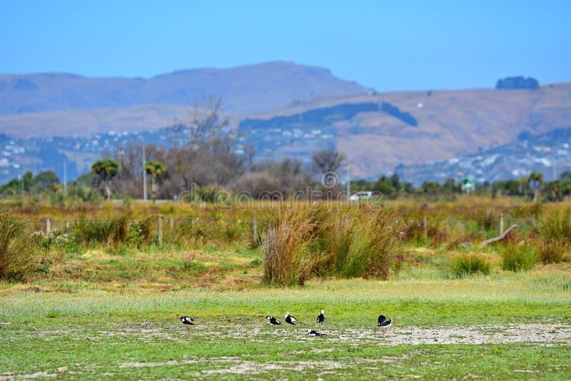 Port Hills según lo visto de Travis Wetland Nature Heritage Park en Nueva Zelanda imagen de archivo