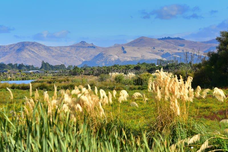 Port Hills según lo visto de Travis Wetland Nature Heritage Park en Nueva Zelanda fotos de archivo libres de regalías