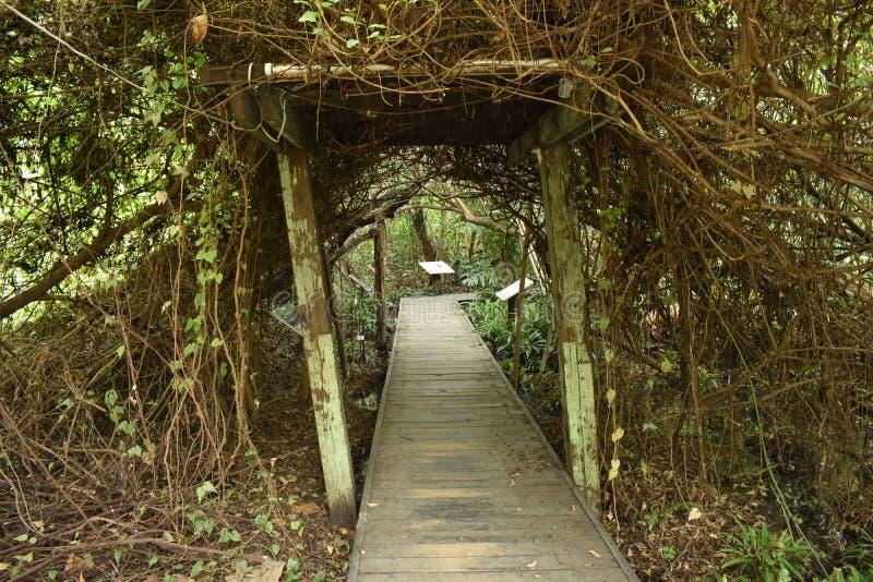 Port in i mangrove fotografering för bildbyråer