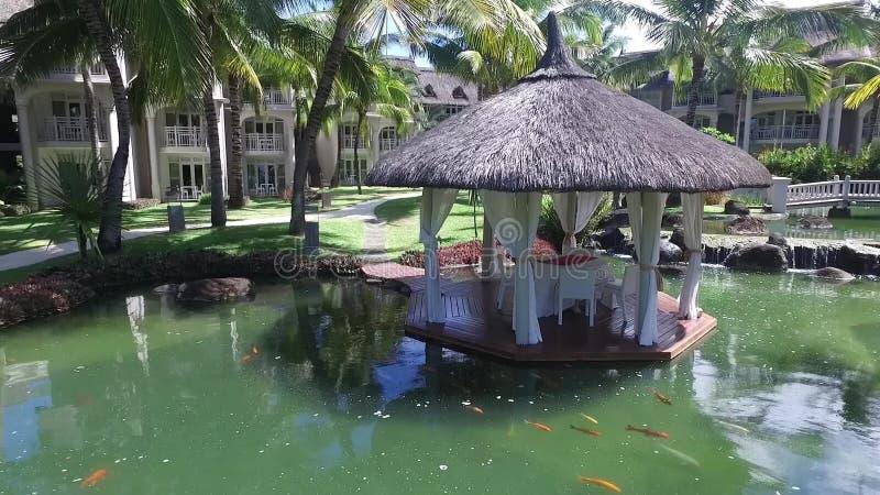 PORT LOUIS, MAURICIO - 2 DE DICIEMBRE DE 2015: Belle Mare Backyard con la piscina y la palmera de agua almacen de metraje de vídeo