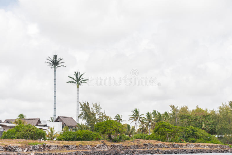 PORT LOUIS, MAURITIUS - OCTOBER 06, 2015: Palm Tree as antenna in Mauritius royalty free stock photography