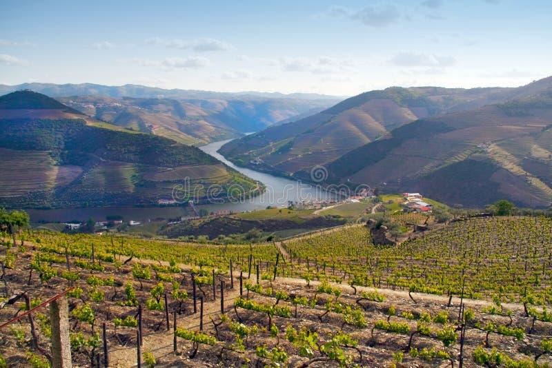 Port wine vineyards landscape stock images