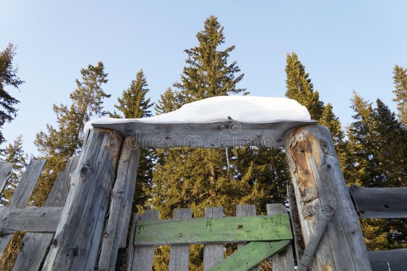 A porta à floresta foto de stock