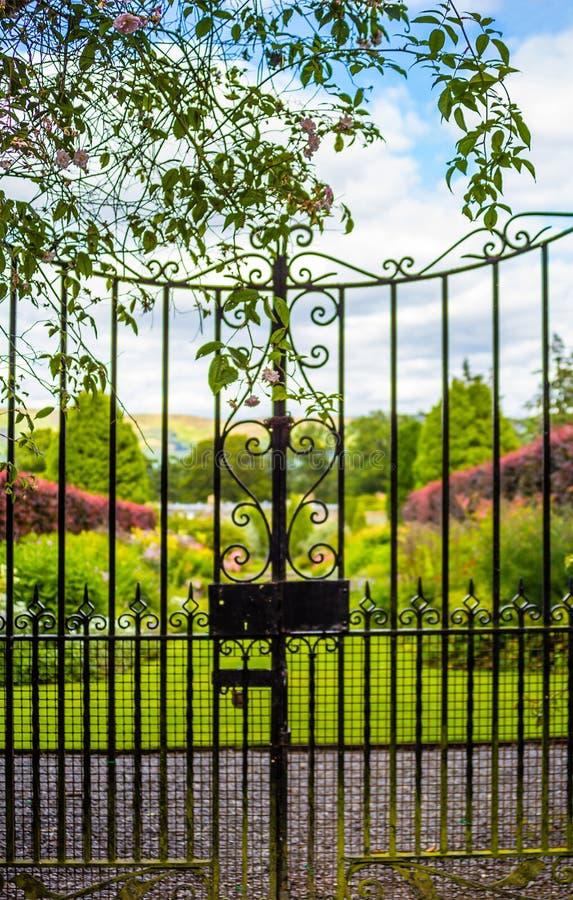 Porta de jardim velha bonita coberta com a hera verde fotografia de stock royalty free