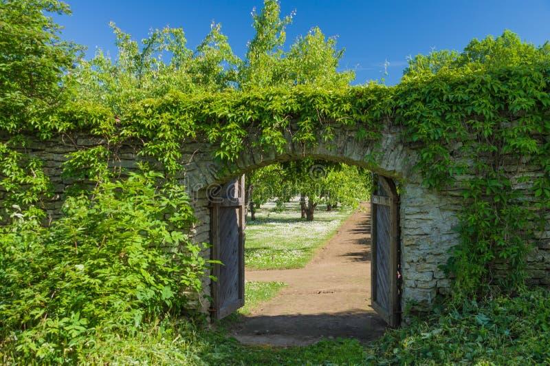 Porta de madeira aberta coberta pela planta de escalada verde fotografia de stock