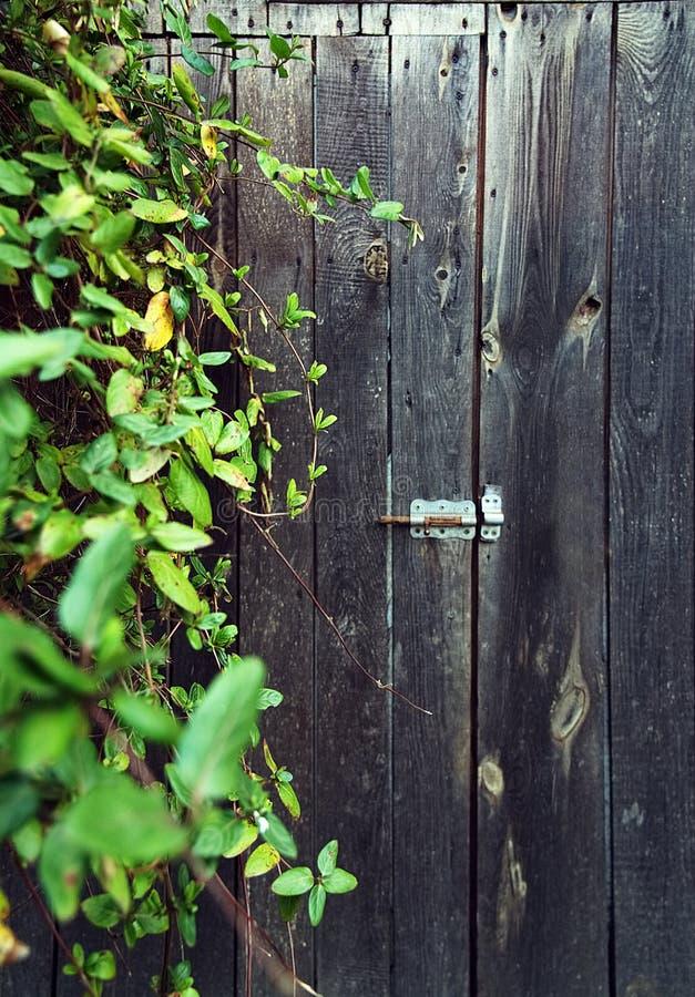 Porta de madeira rural, coberta com as folhas imagem de stock