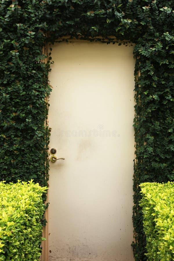 Porta di legno incorniciata con l'edera su una costruzione fotografia stock