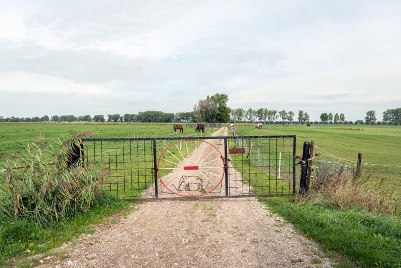 A porta do ferro com um elefante formou de uma barra de ferro fina como o cl foto de stock