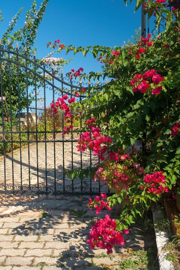 Porta greca tradizionale con i fiori variopinti fotografie stock libere da diritti