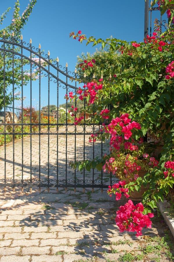Porta greca tradizionale con i fiori variopinti fotografia stock