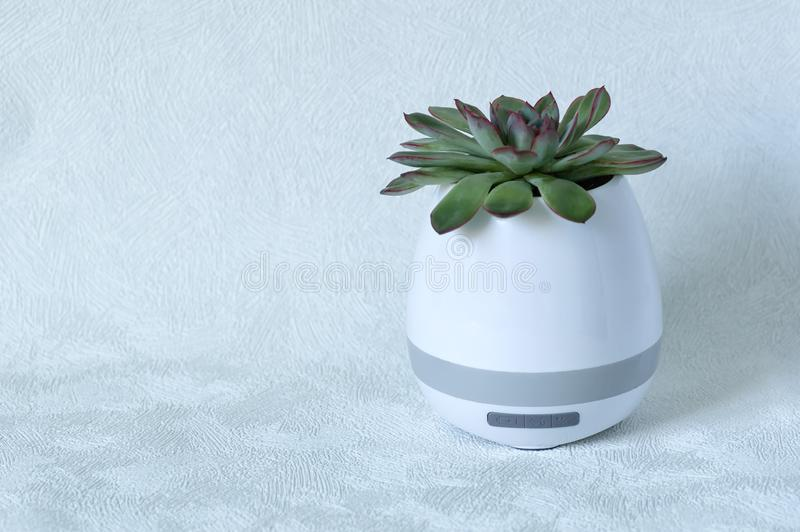 Portable mini speaker in the form of a flowerpot on a white background. Unusual gift royalty free stock photos
