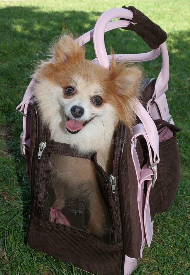Portador del perrito imagen de archivo libre de regalías