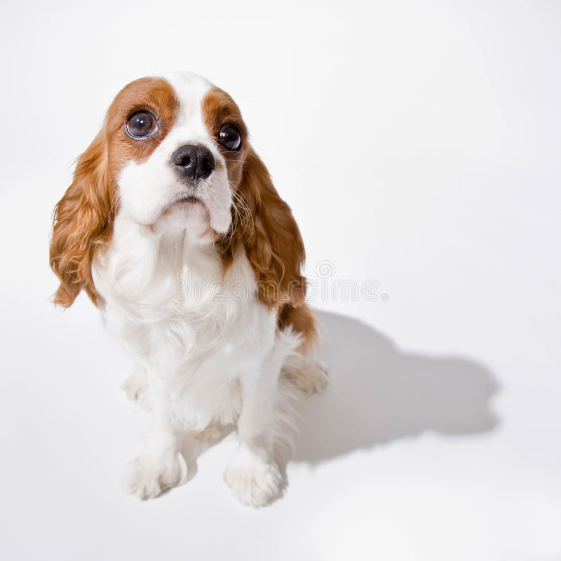 Portait of puppy royalty free stock photos