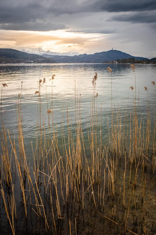 Sunset over lake Wörthersee with some reed and mountain Pyramidenkogel royalty free stock photography
