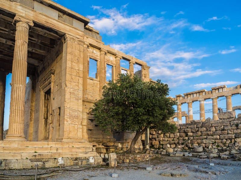 Portal von Poseidon, Teil von Erechtheion, heiliger Olivenbaum, Wände des Tempels von Athena Polias auf Akropolise, Athen, Griech stockfoto