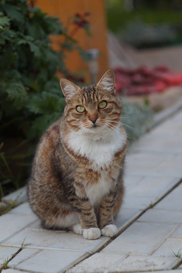 Portarit do fundo esperto bonito do gato foto de stock royalty free