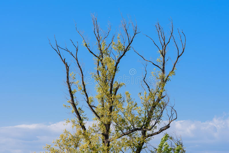 Portate dell'albero sopra le nuvole immagine stock libera da diritti