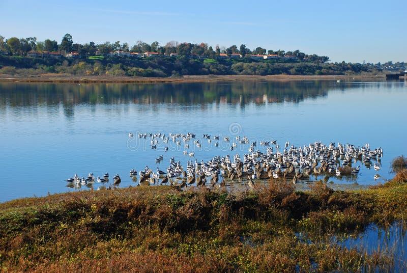 Portate superiori della prerogativa della parte posteriore Bay.Nature della spiaggia di Newport, California del sud. immagini stock libere da diritti