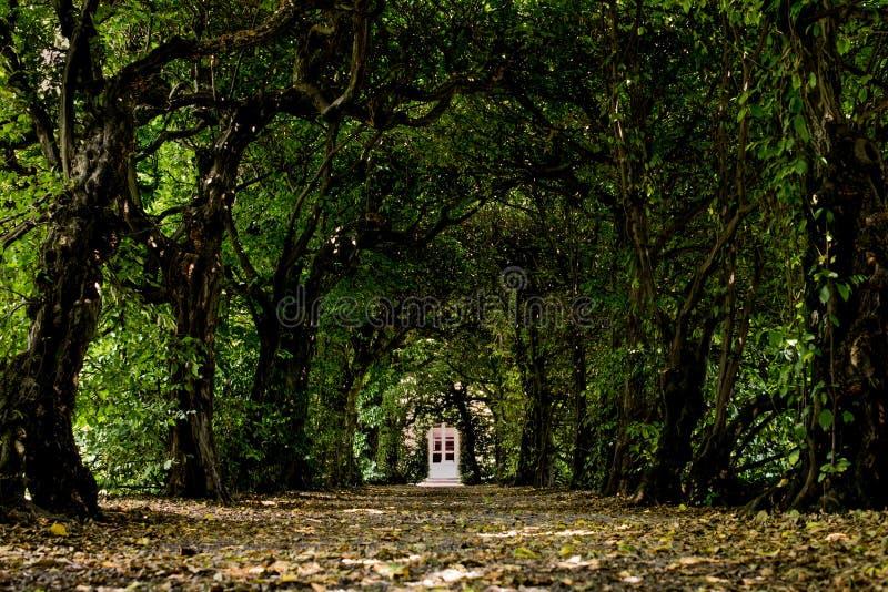 Porte dans un tunnel des arbres images libres de droits