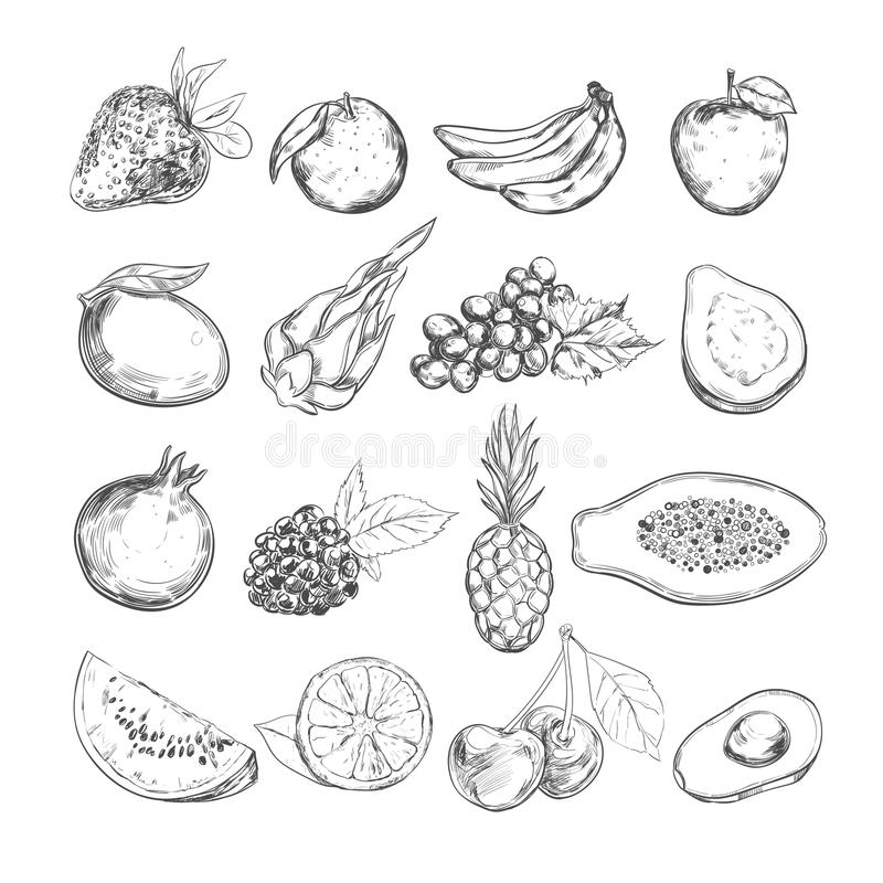 Porte des fruits le ramassage Vecteur tiré par la main Objets d'isolement illustration libre de droits