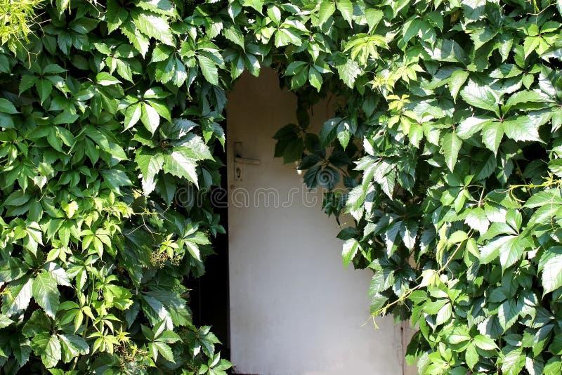 Porte et feuilles en bois des raisins images libres de droits