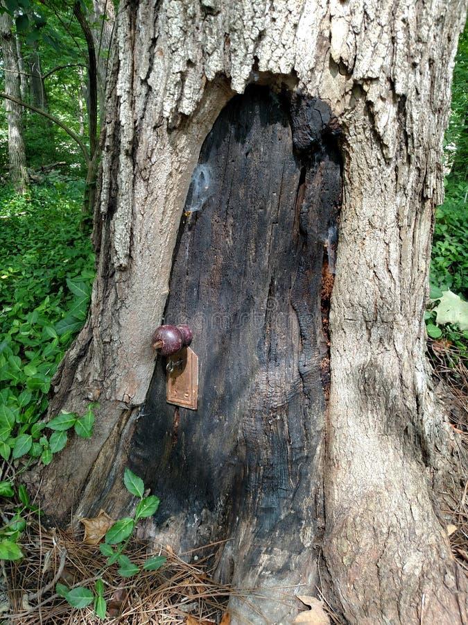 Porte lunatique de Gnome dans la base d'un arbre photographie stock libre de droits