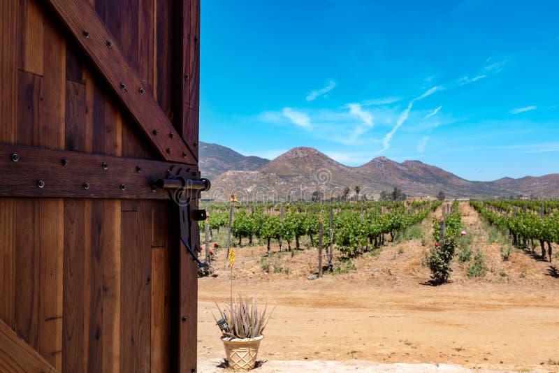 Porte s'ouvrant au vignoble dans Basse-Californie images libres de droits