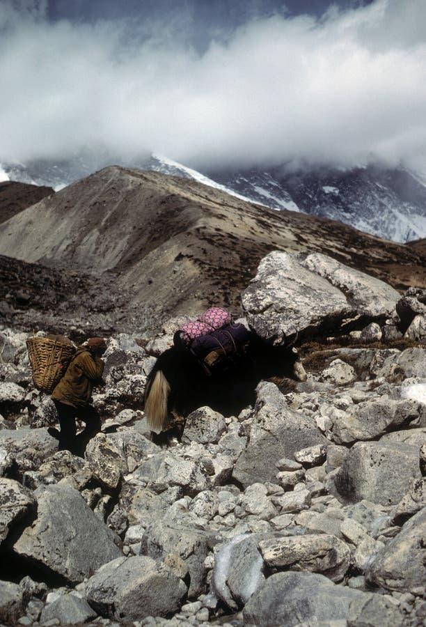 Porteiro e iaques de Sherpa imagens de stock