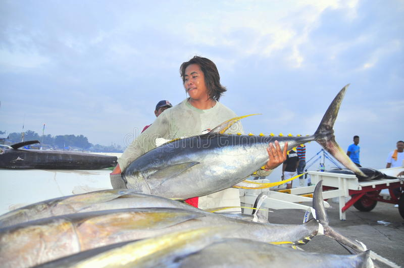 Porters are loading tuna onto truck to the seafood factory in General Santos city stock photo