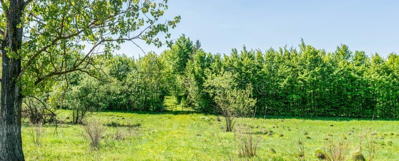 Portes en bois à la propriété privée photo stock